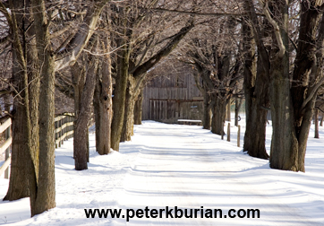 Winter Scene - Peter Burian